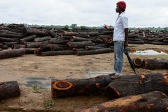 Logged trees for export to China at a Chinese timber company, Beira Corridor, Mozambique (Photo: Joerg Boethling/Alamy Stock Photo)